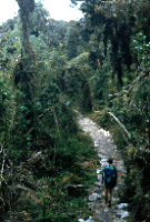 Path in cloudforest